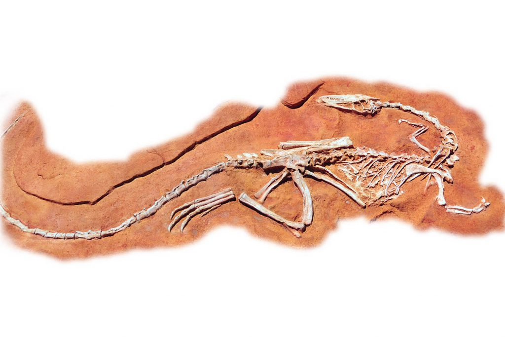 Coelophysis Dig for Playground | Playground Fun For Children Recreation