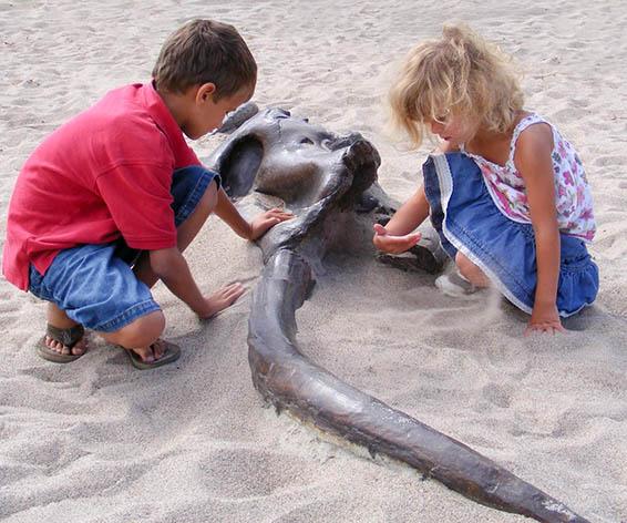 Mastodon Dig for Playground | Commerical Playground Fun Equipment
